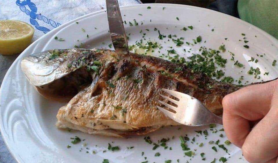 Manfaat Ikan Bagi Kesehatan